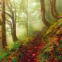 Пазл Тропа Magic forests 1000 деталей
